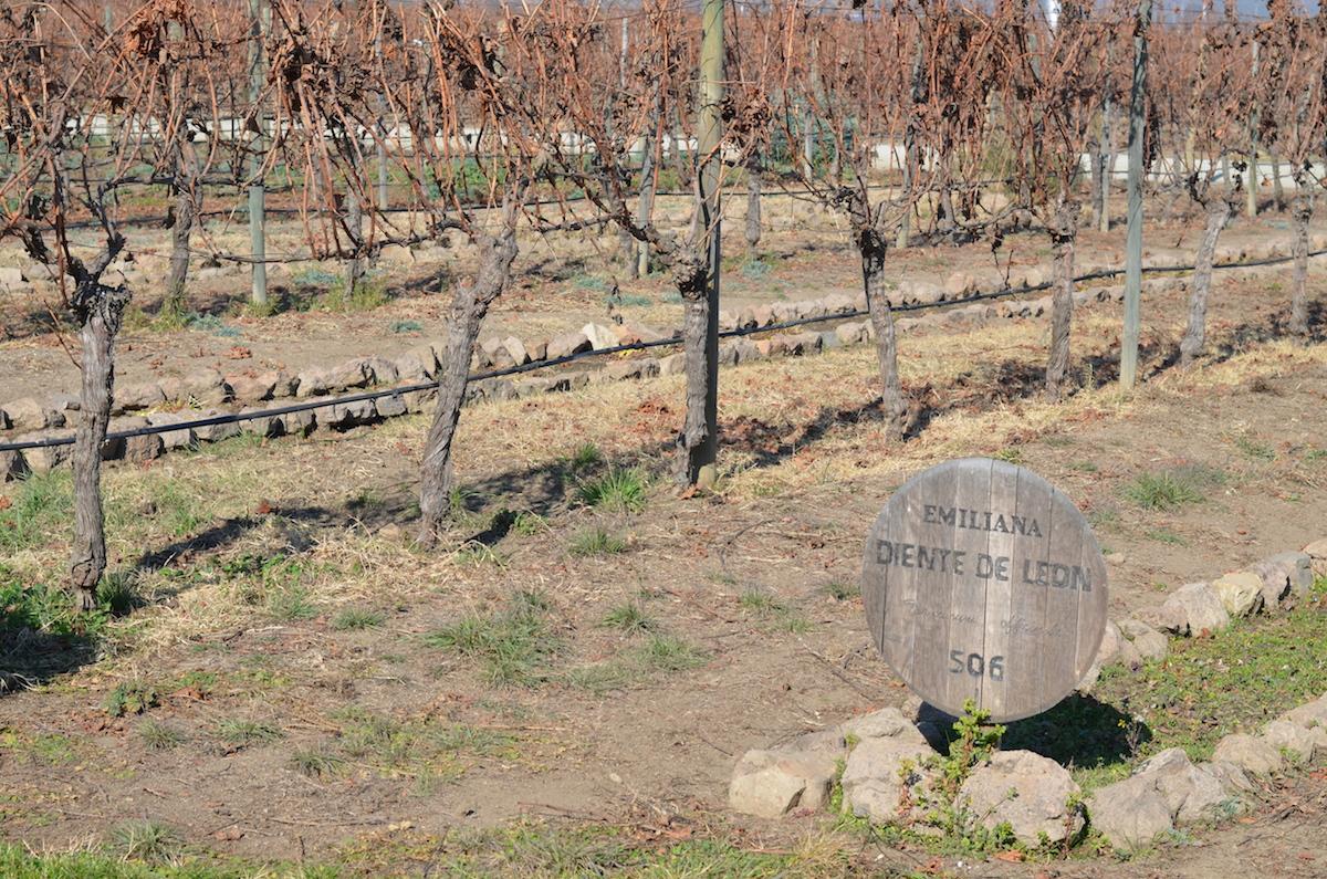 emiliana-vinhos-organicos-beta-pinheiro-6