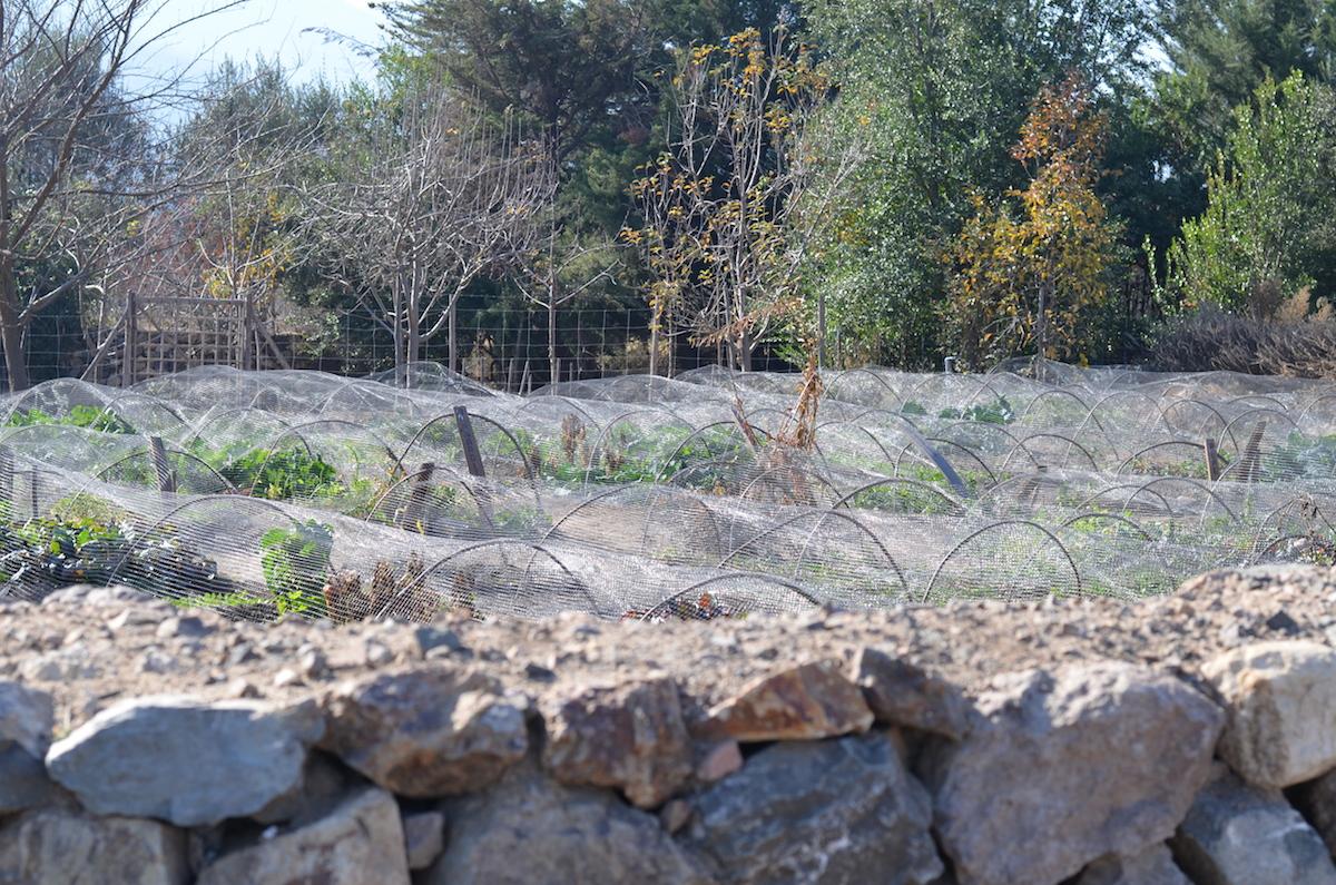 emiliana-vinhos-organicos-beta-pinheiro-7